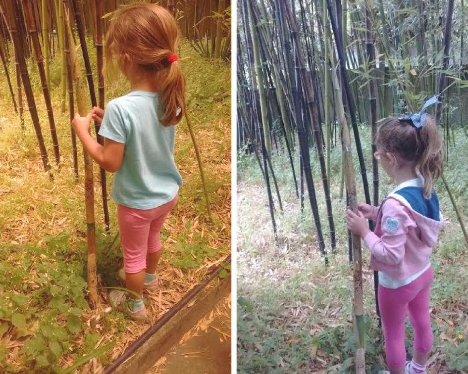¡Mirad cómo ha crecido nuestro bambú en dos días!