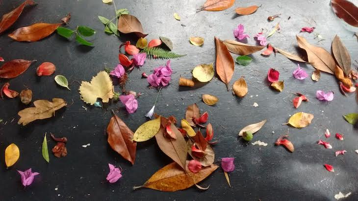 Clasificación y exposición de hojas y flores recogidas en el suelo del jardín