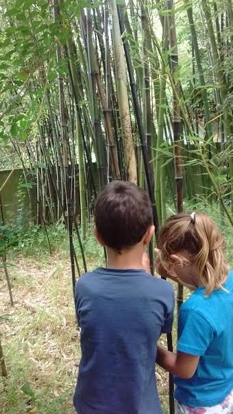 ¡Cómo sigue creciendo nuestro pequeño bambú!
