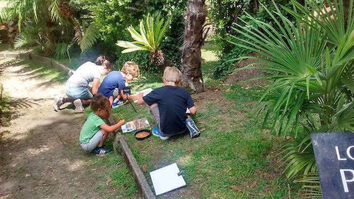 Pintamos los fósiles vivientes del jardín al natural con acuarelas
