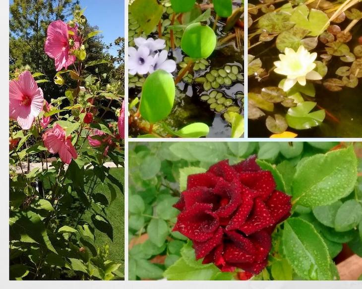 ¡Cuánta hermosura en el jardín!¡Venid a visitarnos!