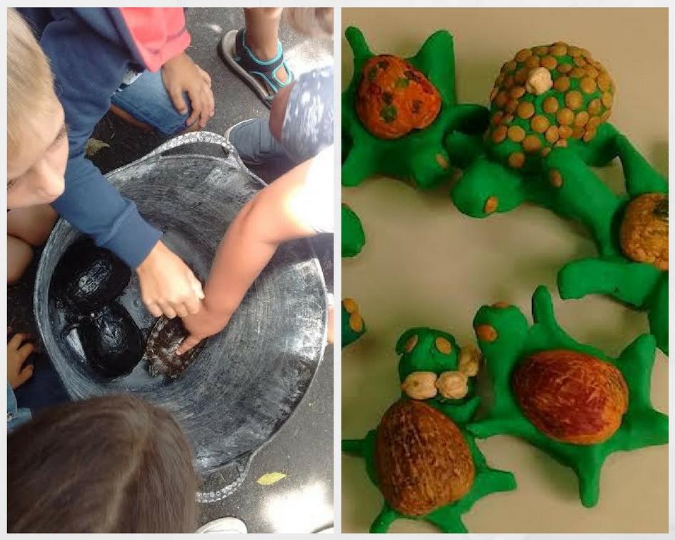 Observamos y modelamos tortugas
