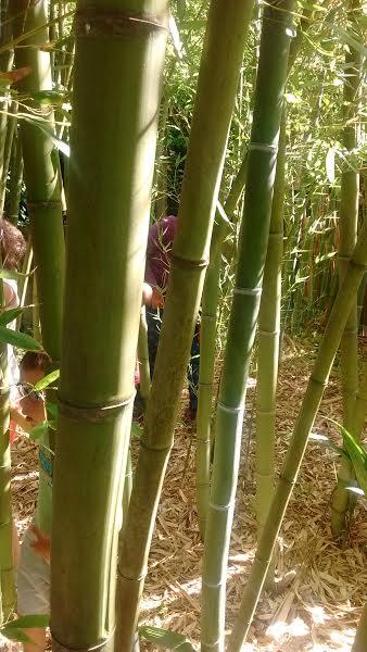 Disfrutamos en el bosquecillo de bambú