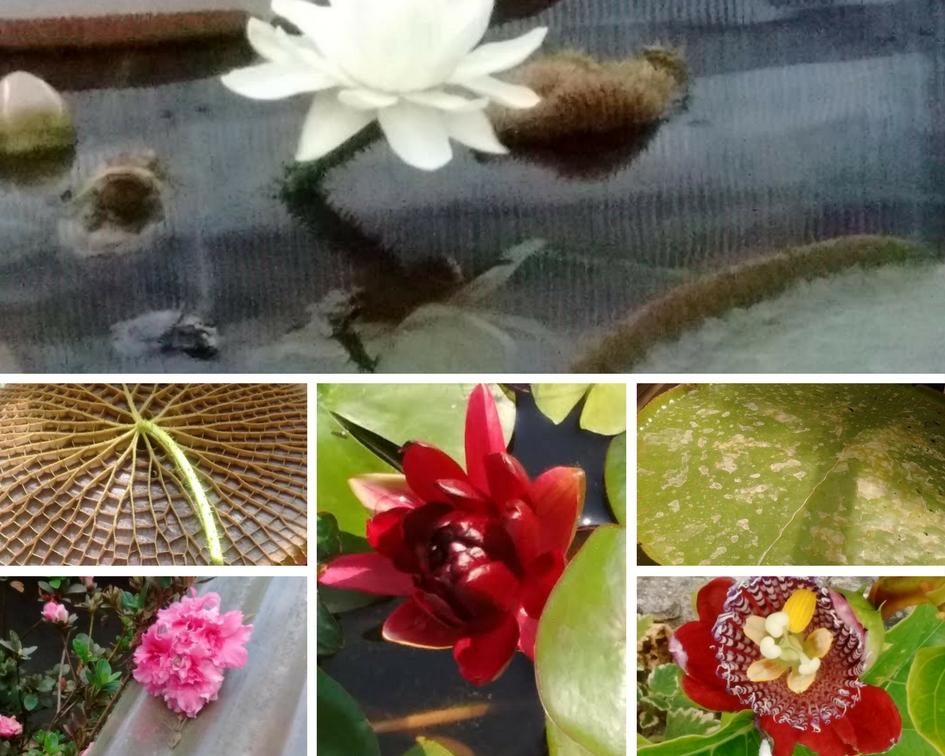 Y elegimos nuestras flores favoritas