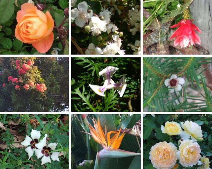Y las flores que más nos han gustado ...