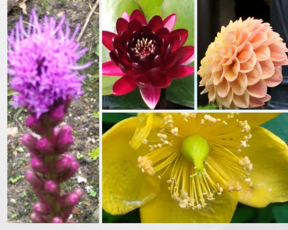 Nuestras flores favoritas de la semana.