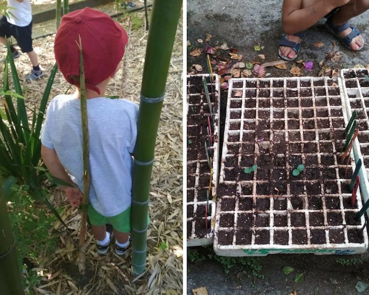 ¡Cómo crecen los bebés bambú y nuestras semillas!