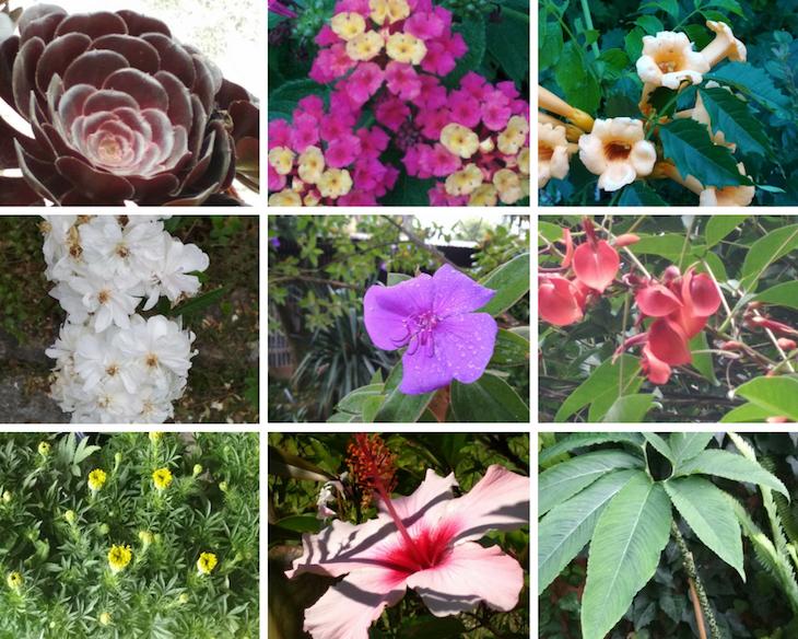 Nuestras plantas y flores favoritas de la semana.