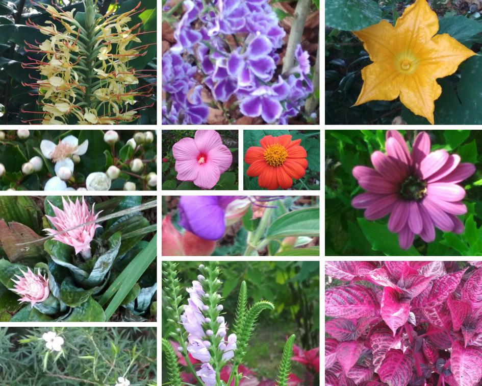 Nuestras flores favoritas de la semana