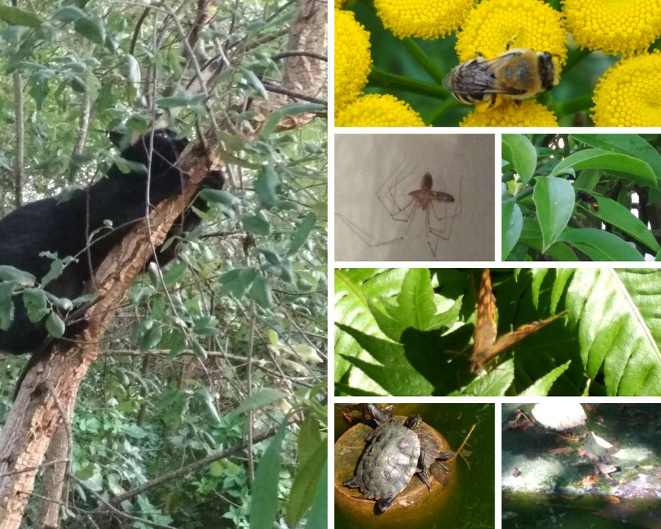 Los animales que hemos ido observando por el jardín.