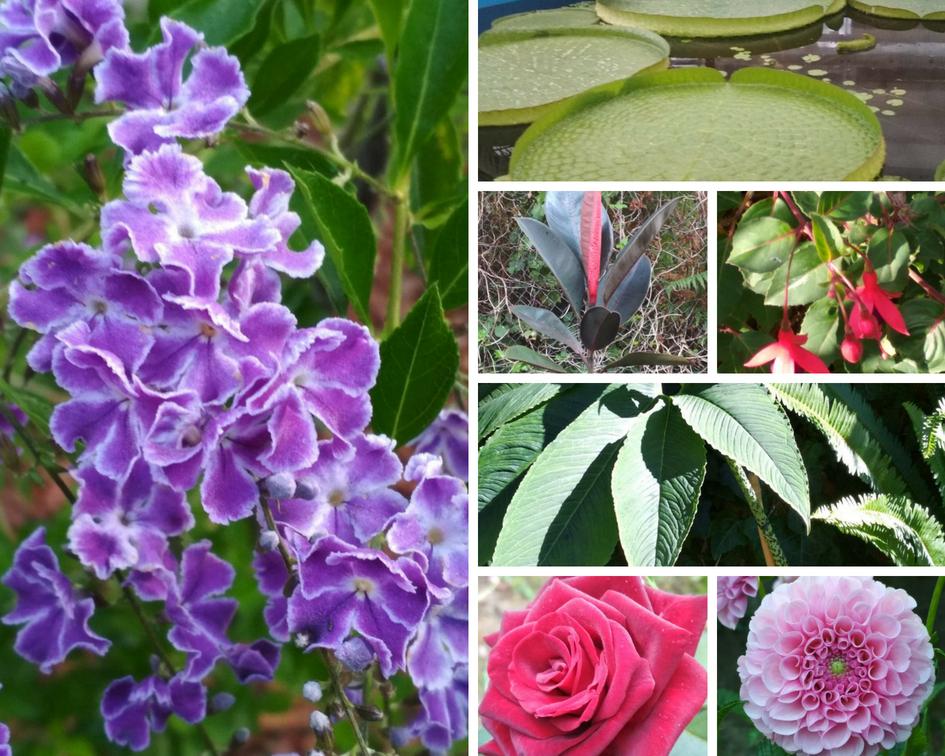 Nuestras especies vegetales favoritas de esta semana.